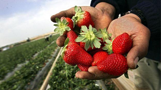 La luna de fresa (Strawberry Moon, en inglés) toma el nombre por la cosecha de esta fruta en el Hemisferio norte.