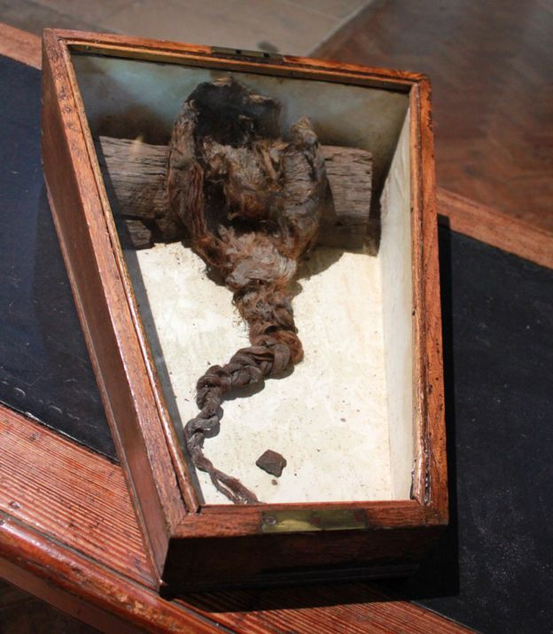 The hair in its display case