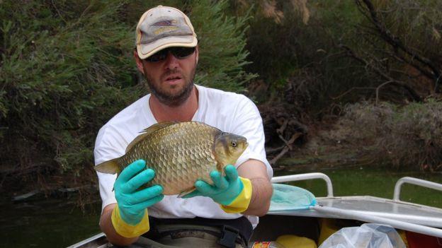 Cientifico Stephen Beatty con un pez carpa