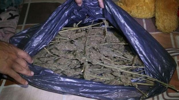 Marihuana incautada en Paraguay