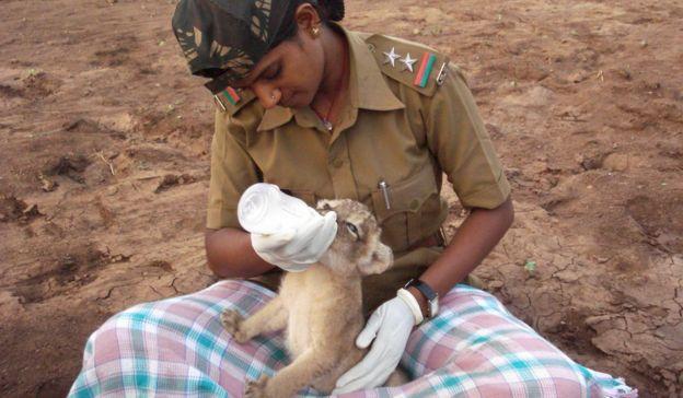 Rasila Vadher feeding a lion cub