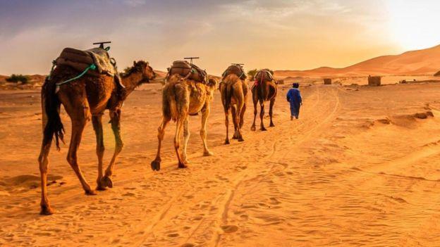 Cáfila no deserto