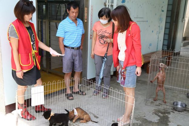 Shelter worker shows a family some dogs in their shelter