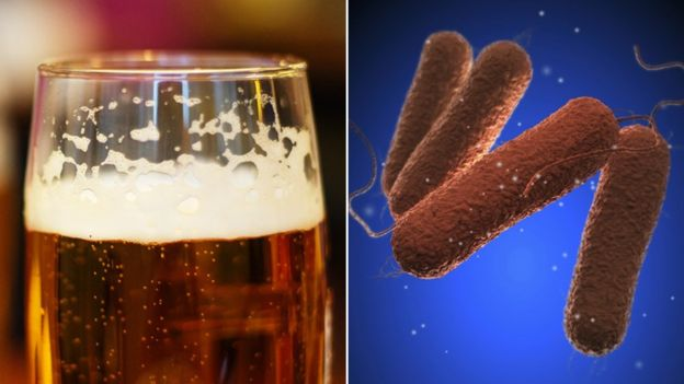 A pint of beer and salmonella cells