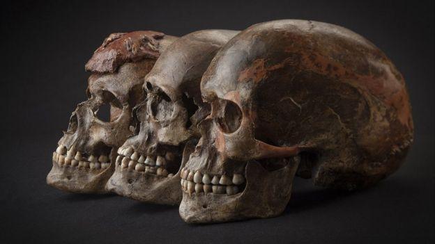 Palaeolithic human skulls from DolniVestonice