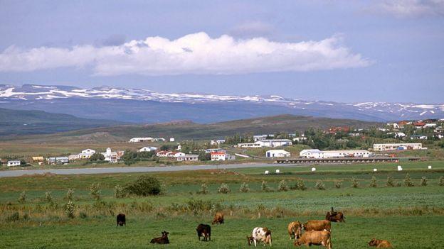 imagen de pueblo de Islandia con vacas en primer plano