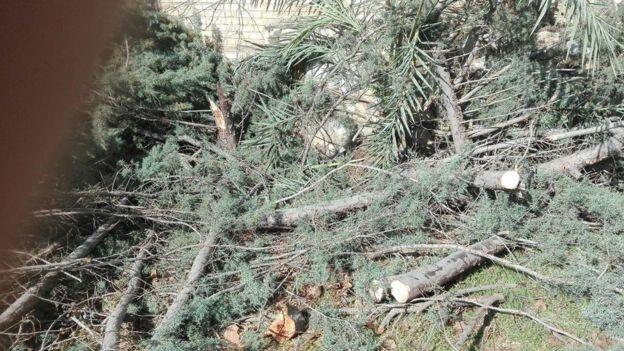 قطع درختان: عوامل و ریشهها