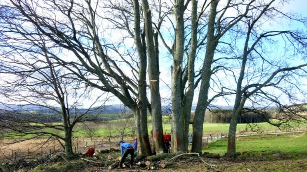 Trees being felled