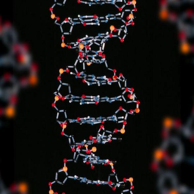 Modelo molecular de ADN