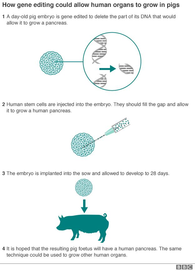 How gene editing works