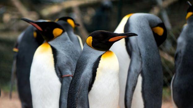 Пингвины обычно держатся поближе друг к другу