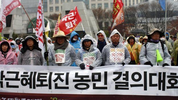 گروهی از کشاورزان هم در اعتراض علیه خانم پارک مشارکت کردند