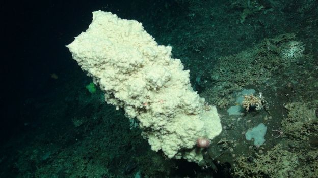 A glass sponge covered in feather stars