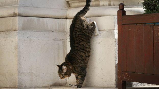 Кошка Фрейа