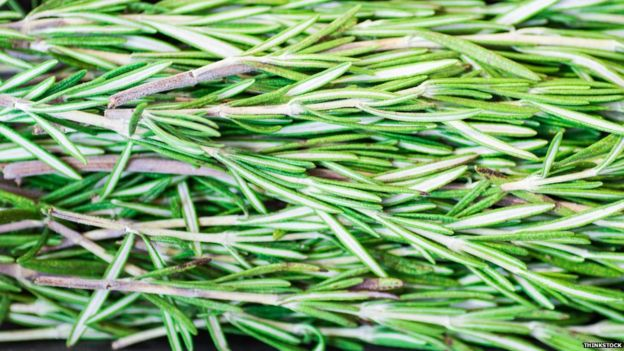 What does rosemary do to your brain?