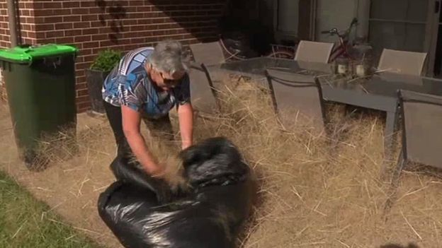 Frustrated residents are forced to clear out the weeds for several hours every day