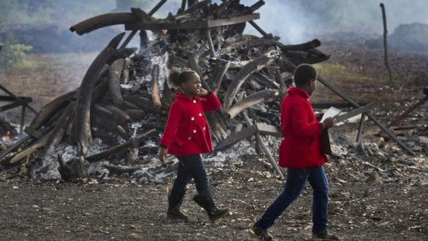 Kenyan children visit the still-smouldering pyres of more than 100 tonnes of elephant tusks and over 1 ton of rhino horns, in Nairobi National Park, Kenya Monday, May 2, 2016