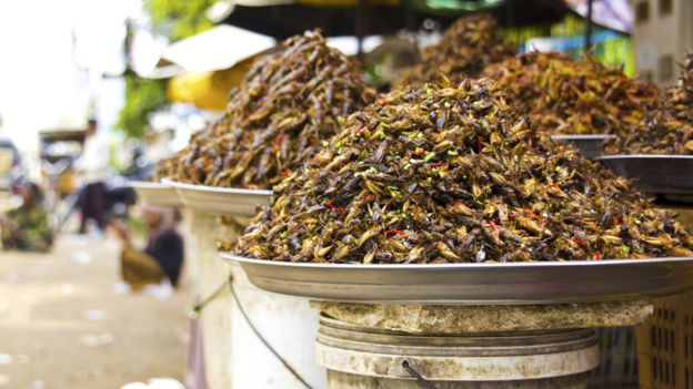 Plates of insects for sale in a Cambodian market