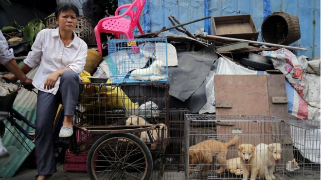 A vendor waits for buyers beside dogs for sale at a market in Yulin city, southern China