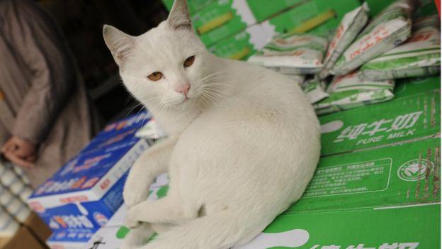 Gato sobre cajas de leche
