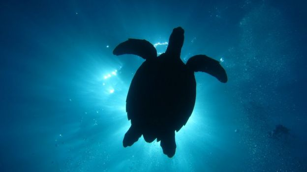 Florida turtle