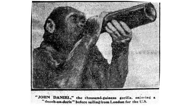 O gorila John Daniel