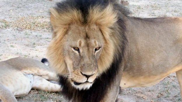 Cecil the lion, Paula French via AP, 2012