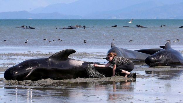 Joven echando agua a la piel de una ballena
