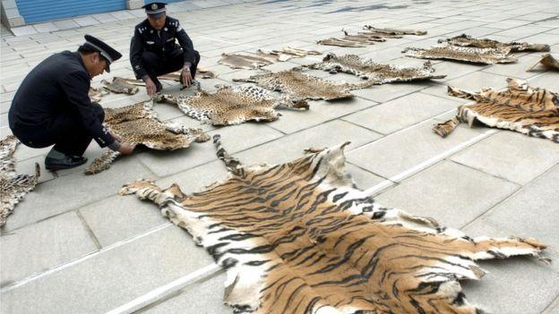Tiger skins