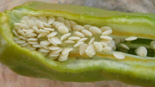 A chilli pepper cut open to reveal the seeds and placenta