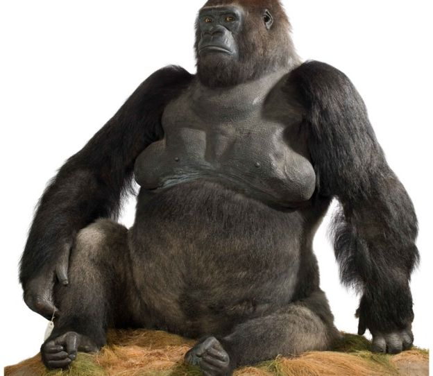 Guy the gorilla