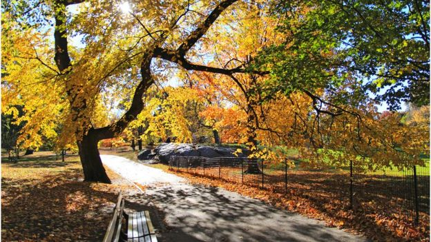 Arboles de Central Park