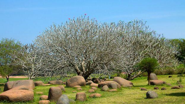 Parque da Unidade em Auroville