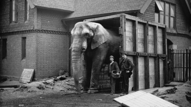El elefante Jumbo de Ringling Bros. and Barnum & Bailey