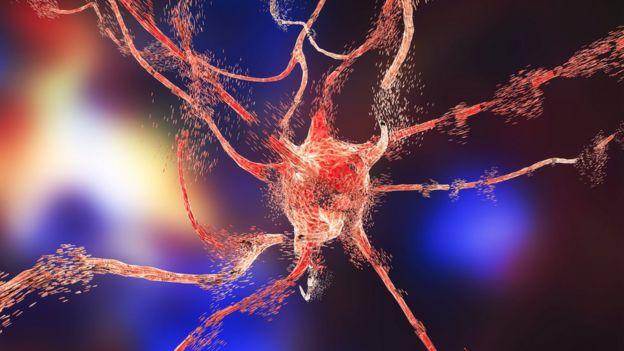 Neurona en el cerebro