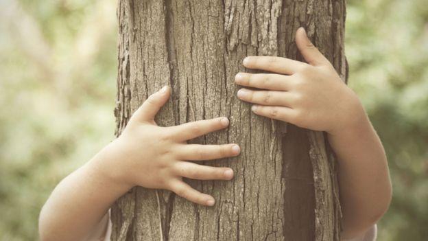 Menino abraça árvore