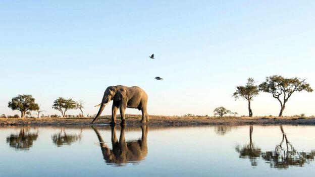 Fillər öz əkslərini tanıyırlar