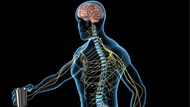 Ultimos Avances en Ciencia y Salud - Página 14 _89975494_89975493