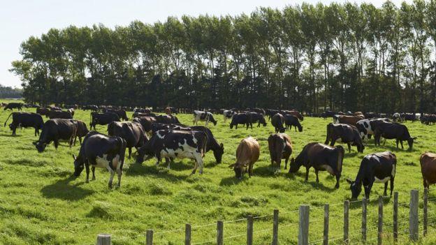 Pengxin farm