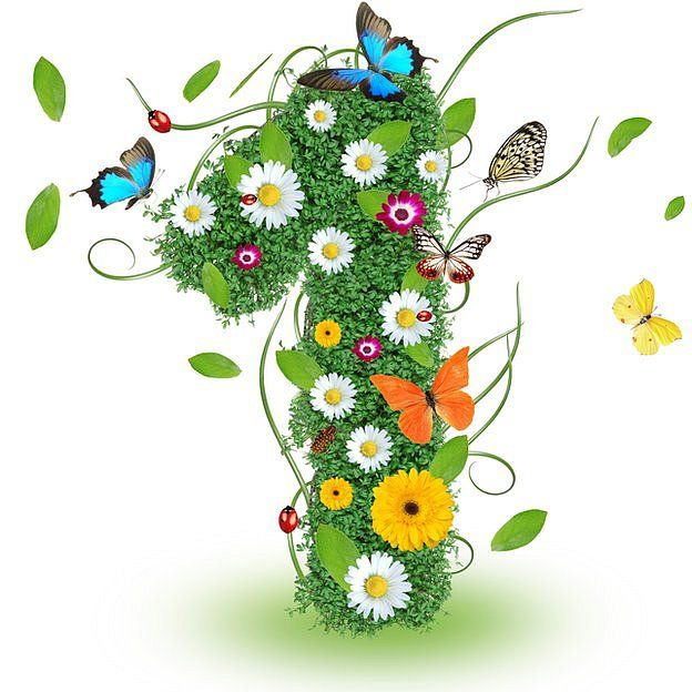 1 primaveral