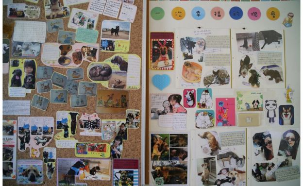Boards with pictures of rescue dogs and happy owners on display at the shelter