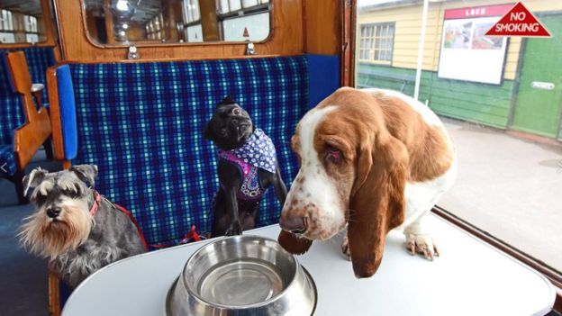 The North Yorkshire Moors Railway have created a train carriage dedicated just to dogs.