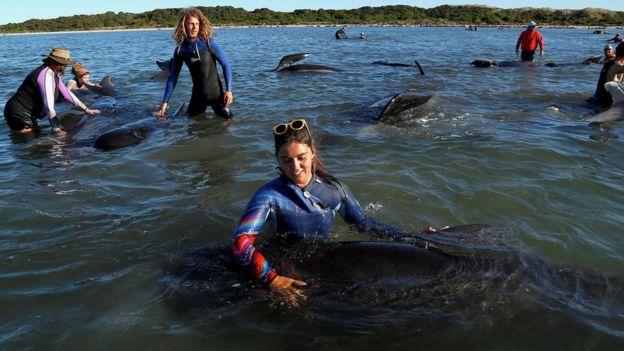 Jóvenes voluntarios acompañando diferentes ballenas