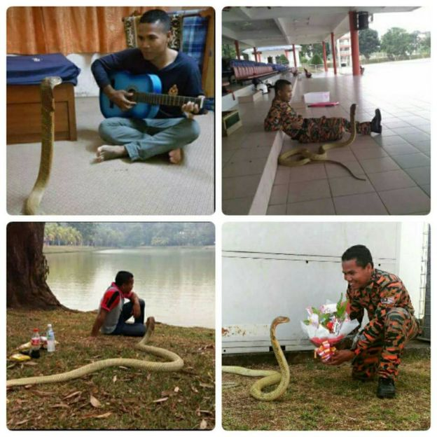 Abu Zarif Husin with his pet snake in various locations
