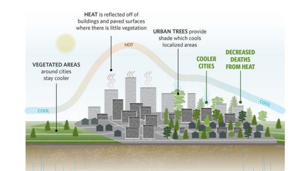 Heat island effect (Image courtesy of TNS)