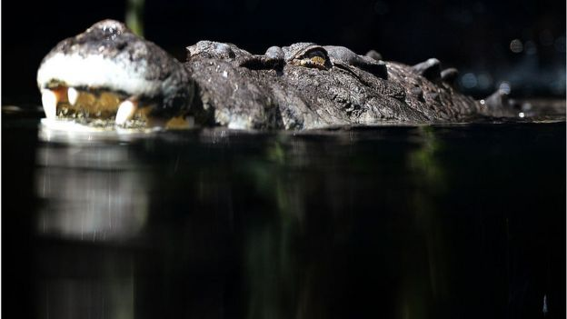 File photo of a crocodile