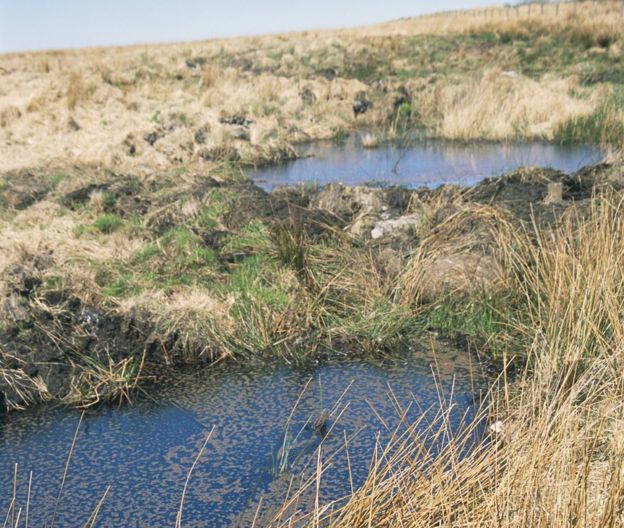Blanket bog - Exmoor, undated