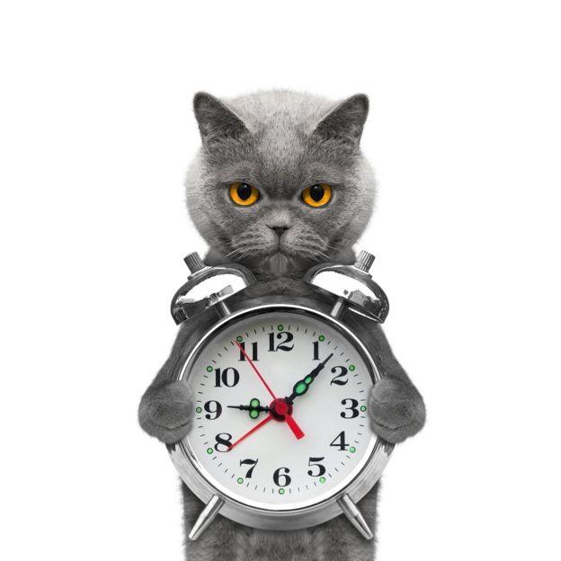 Un gato sosteniendo un reloj