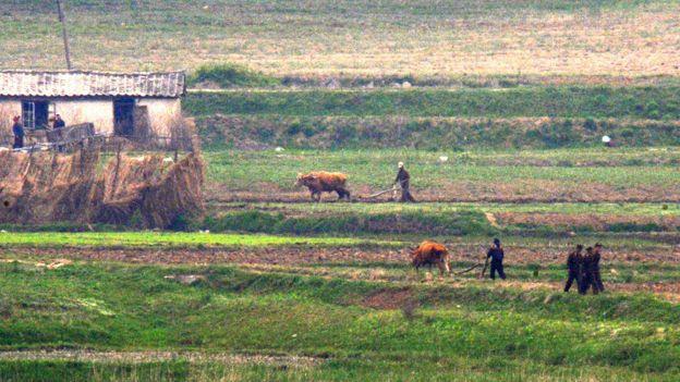 Şimali Koreyalı fermerlər
