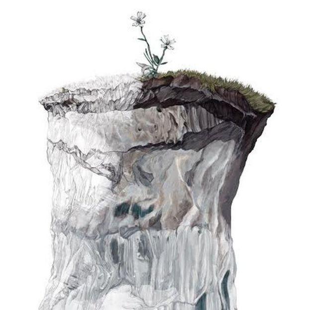 Ilustración de la especie Silene stenophylla